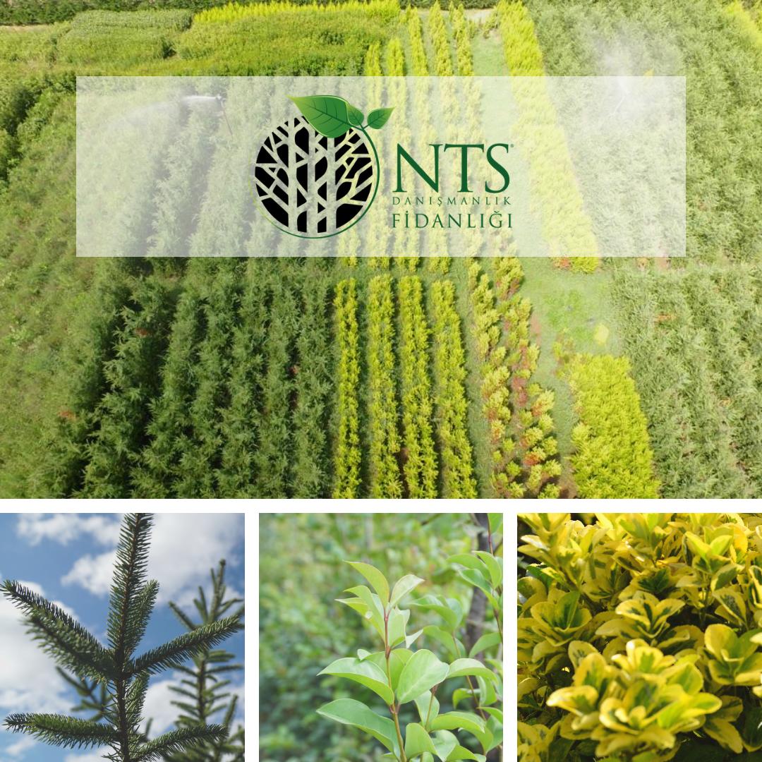 NTS Danışmanlık Fidanlığın'dan doğaya büyük katkı