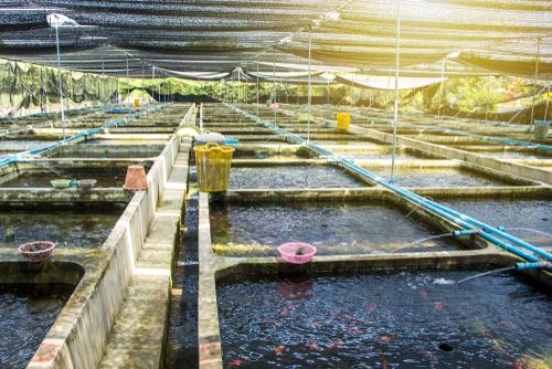 Su ürünleri ihracatına yeni destek