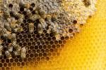 """""""Ekolojik sistemin devamlılığı için arıları korumalıyız"""""""
