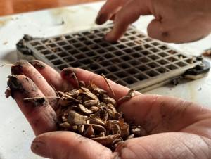 Domino's ecording iş birliğiyle 15 bin tohum topu atışı yapacak