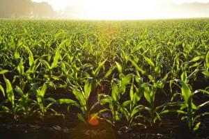 Agrico Yatırım Holding tarım ve hayvancılık sektörüne yenilik getiriyor