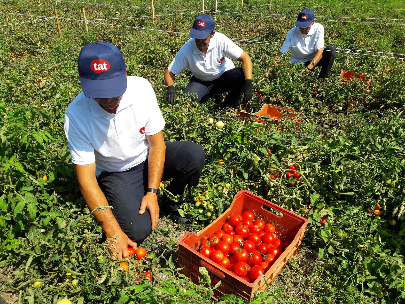 Tat, her yıl çiftçisine sunduğu desteği 23 milyon TL'ye yükseltti